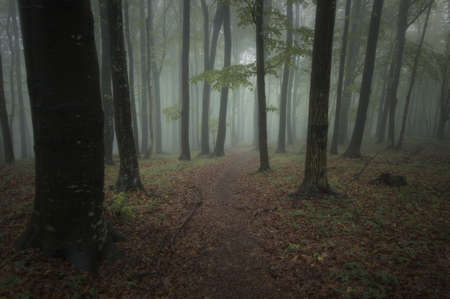 dark forest on a summer night Stock Photo - 14585080
