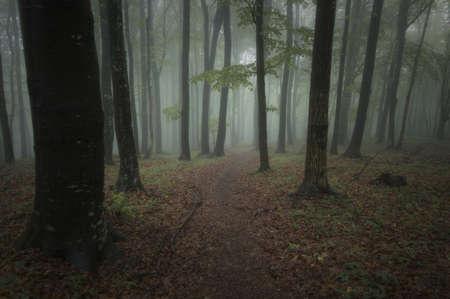 dark forest on a summer night Stock Photo - 14585080