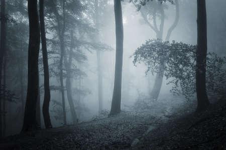 dark forest: path through a dark forest
