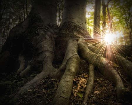 wortels in een gouden bos bij zonsondergang