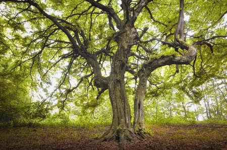 stare drzewa w zielonym lesie