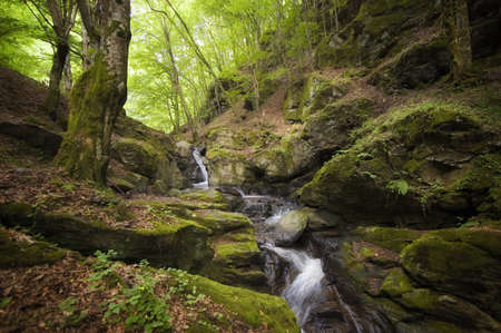 river and waterfalls in a wild forest  photo