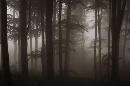 dark forest sepia photograph Stock Photo