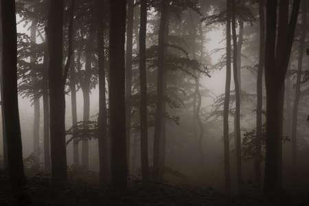 dark forest sepia photograph Stock Photo - 14868792
