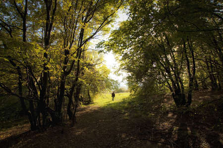 man walking out of a colorful forest Stock Photo - 14868836