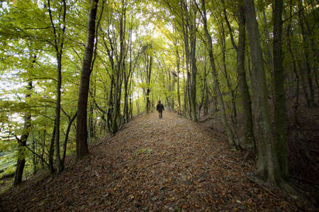 man walking in a colorful forest in summer Stock Photo - 14868859