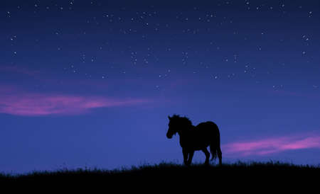 horse silhouette on the top of a hill against twilight sky with stars  photo