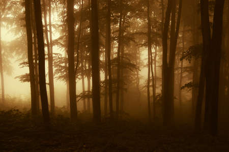 rain forest background: sunrise at the edge of a forest in autumn  Stock Photo