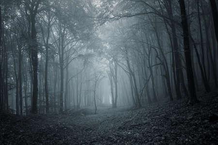foresta: notte in una foresta oscura Archivio Fotografico