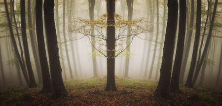 beautiful tree in a forest in autumn  Stock Photo - 14975667