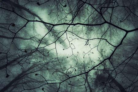 abstract magisch bos Stockfoto