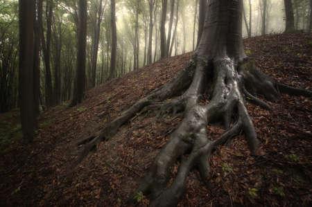 霧の森の木の根をウェットします。 写真素材 - 15122905