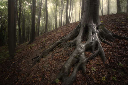 wet tree roots in a misty forest photo