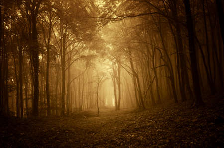 golden forest at sunset with fog Stock Photo
