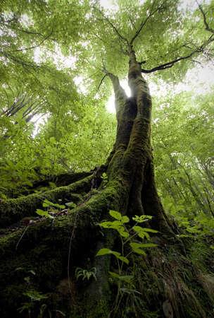 boom met mos in een groen bos Stockfoto