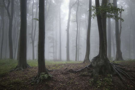 fog in forest after rain photo