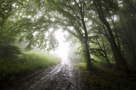 road trough a green forest with fog  Stock Photo - 15159841
