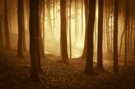 sunset in a fantasy forest Stock Photo - 15173289