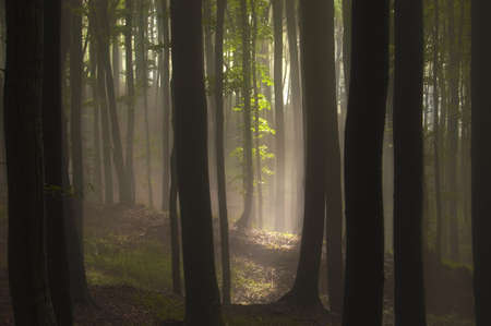 black and white forest: sun shining in a dark forest