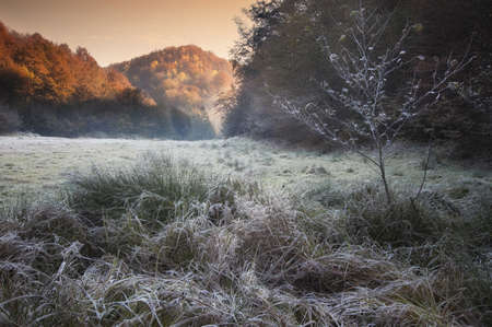 cold autumn morning with frozen rime and the sun rising  photo