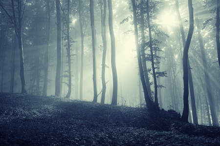 forest with sun rays through tree branches Stock Photo - 15379752