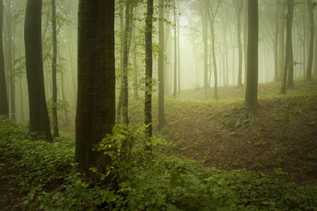 spring in a green forest Stock Photo - 15379753