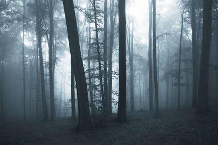 woodland  horror: Dark misty forest Stock Photo