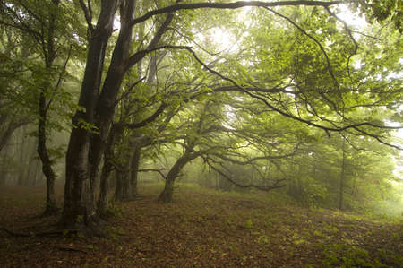 Groen bos met mist Stockfoto