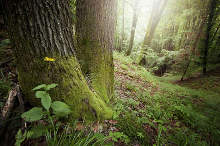 Green moss on trees in forest  Stock Photo - 15827433