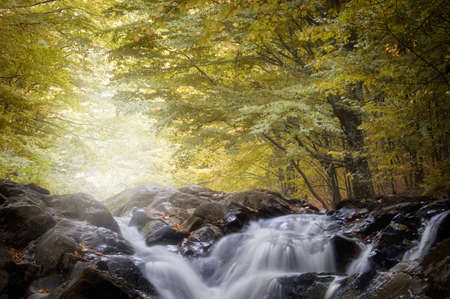 Waterfall in a forest in autumn with yellow trees Stock Photo - 15827434