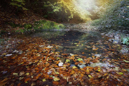 Autumn scene with colorful leafs in a lake Stock Photo - 15827435
