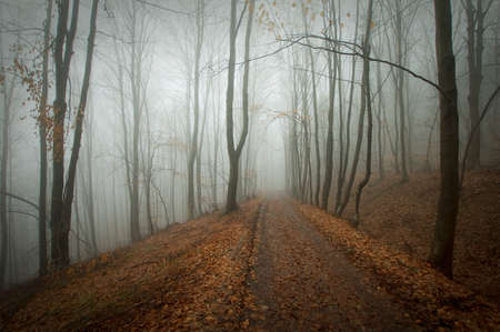 Road trough a mysteus forest with fog in autumn Stock Photo - 15827432