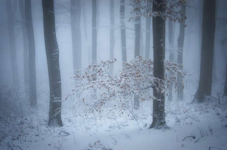 Tree in a snow in winter Stock Photo - 15827431