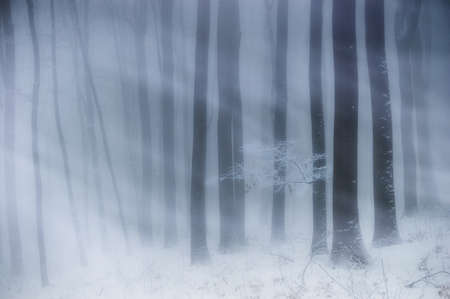 Snowstorm in a forest in winter  photo