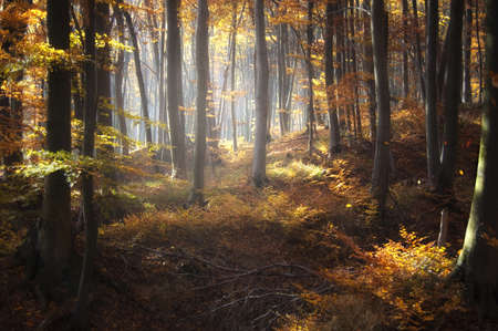 Colorful forest in autumn Stock Photo - 15935866