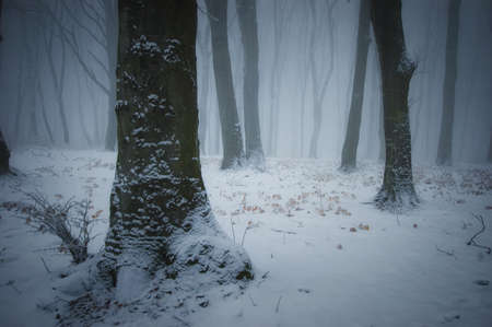 Winter in a forest with fog Stock Photo - 15935861