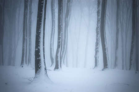 christmas ground: Winter scene in a forest with snow on trees Stock Photo