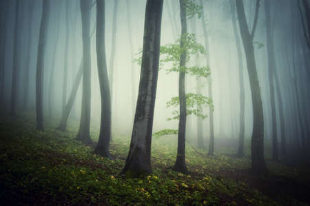Beautiful forest with fog and trees Stock Photo - 15935862