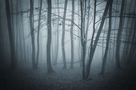 Mysterious dark forest with thick fog photo