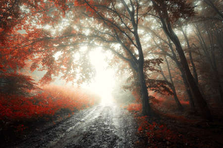 mystery woods: Dark forest with red leafs and fog Stock Photo