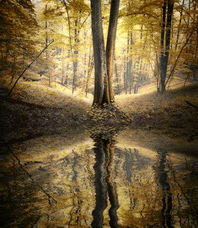 Jezioro w lesie jesienią z odbicia drzew w wodzie
