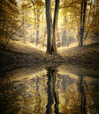 Lake in a forest in autumn with reflection of trees in water photo