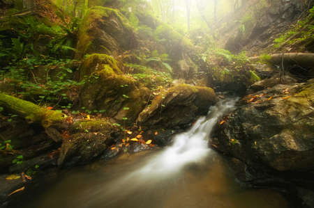 Mountain river in a forest with beautiful colors Stock Photo - 16256052