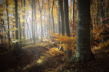 mystery woods: Beautiful autumnal landscape in a forest  Stock Photo