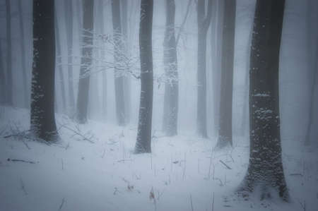Forest with snow and fog in winter Stock Photo - 16256046