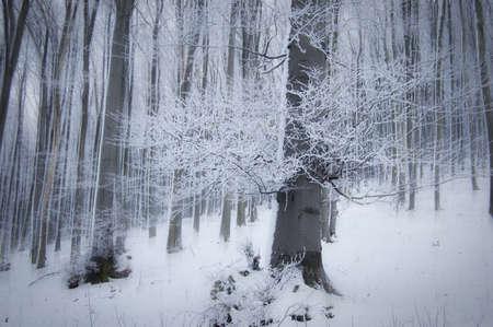 Dziwne las w zimie z wielkim drzewie