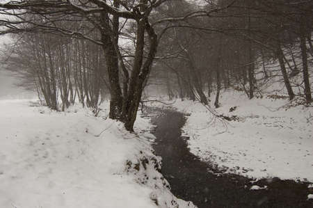 Winter landscape with snow, river and trees Stock Photo - 16256053