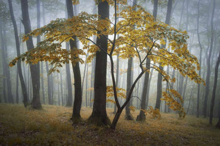 Colorful tree with autumn leafs in a forest Stock Photo - 16256054