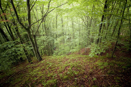 Green forest in summer Stock Photo - 16400281
