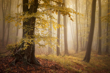 Beautiful forest with fog and colorful trees Stock Photo - 16400279